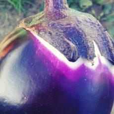20180710_eggplant