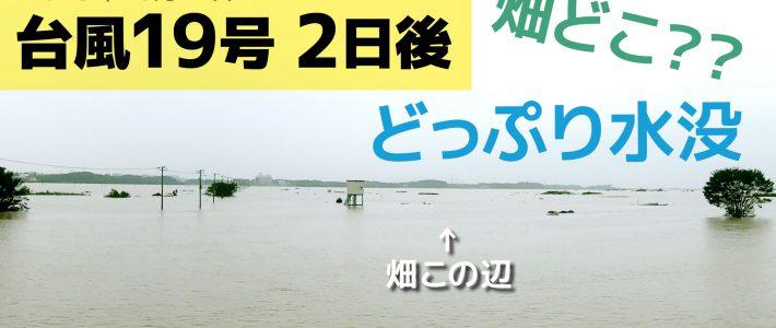 台風19号 2日後どっぷり浸水した畑