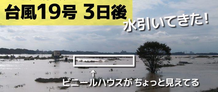 台風19号 3日後 浸水畑の水位が下がってきた!新たな畑へ作付け準備