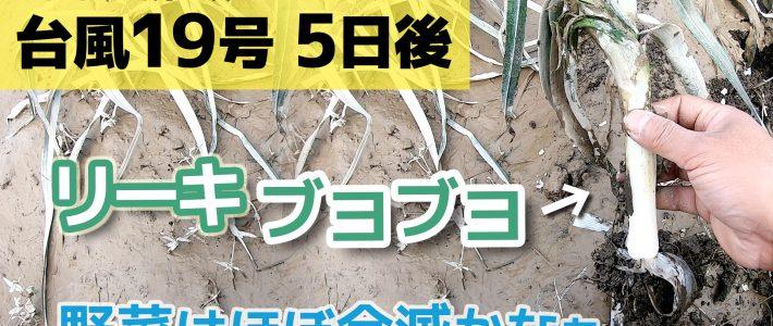 台風19号 5日後 浸水畑の野菜はやっぱりダメかなぁ