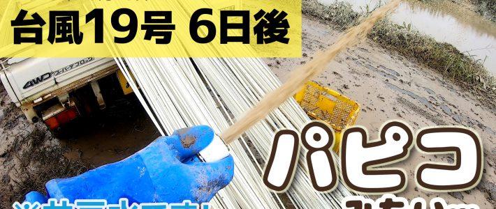 台風19号 6日後 浸水畑の資材を救出&種まき準備
