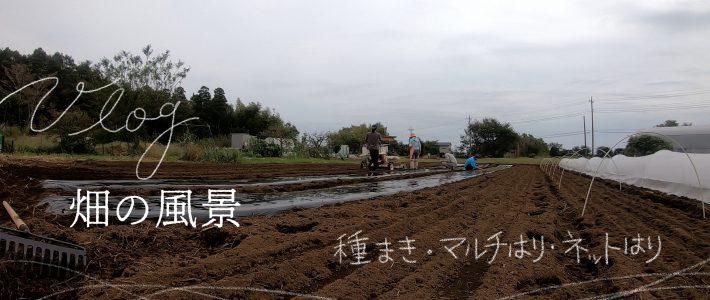 vlog畑の風景 種まき_マルチ張り_ネット張り_草とり2019/10/21
