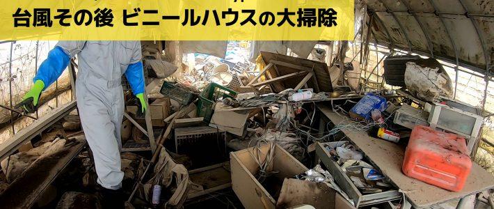 台風19号 10日後  水没ビニールハウスの大掃除