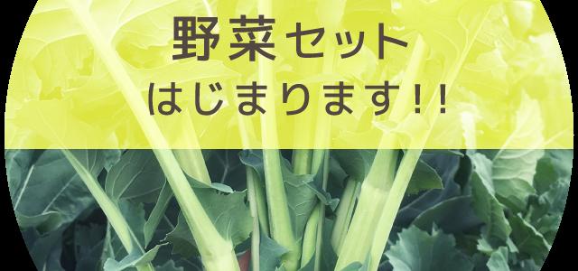 春の野菜セット受付開始!