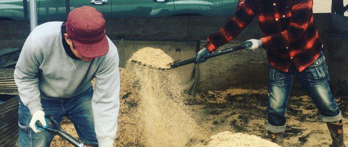 仕事はじめは堆肥の仕込み