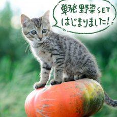 【2021】野菜セット単発販売の受付もはじまりました!